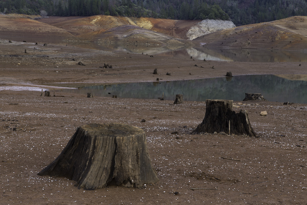 Exposed stumps because of low water level, Shasta Lake, California