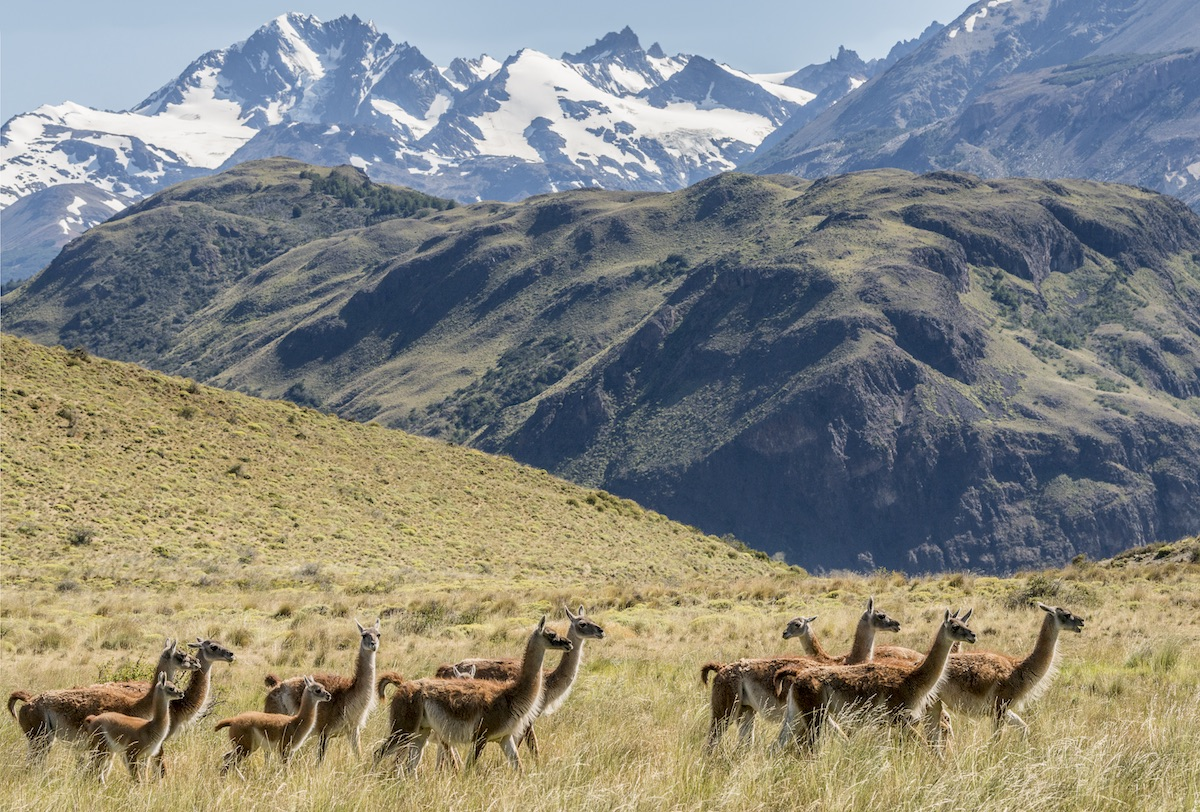 The new Patagonia National Park. Photo: Conservacion Patagonica