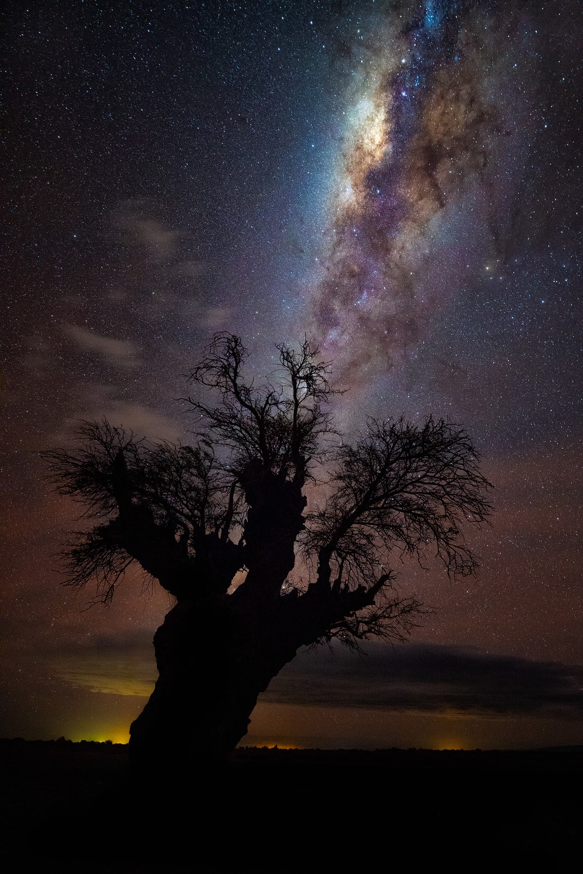 Algarrobo and Milky Way in the Salar de Atacama, Antofagasta Region.