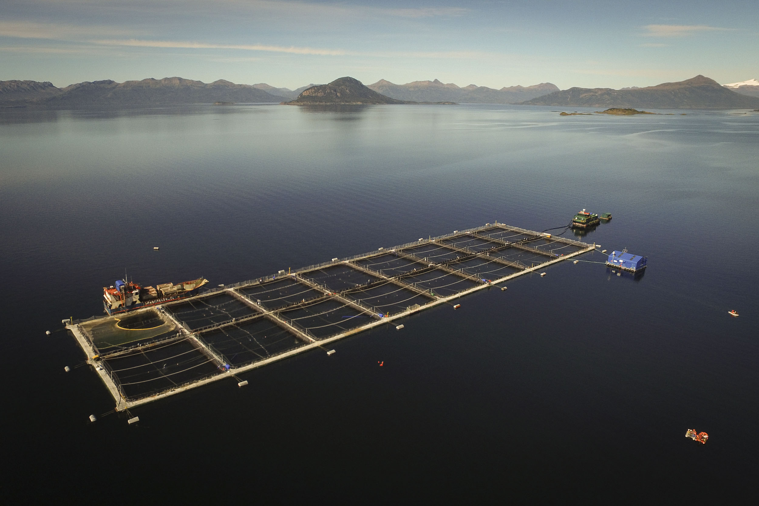 Greenpeace activists arrive in zodiacs to the salmon pens of Cermaq in Seno Skyring, Magallanes.