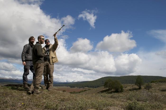 Buscando individuos por telemetría desde la cumbre de un cerro en Tierra del Fuego. Foto: The Trackers