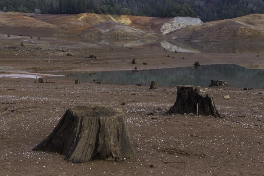 Tocones expuestos debido al bajo nivel de agua, Lago Shasta, California