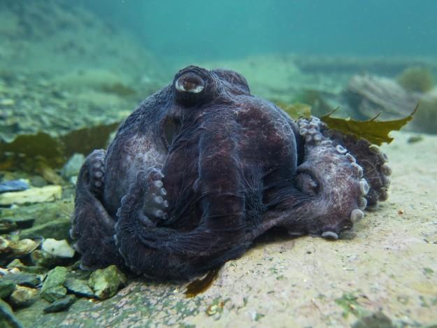 Foto: Beagle Secretos del Mar