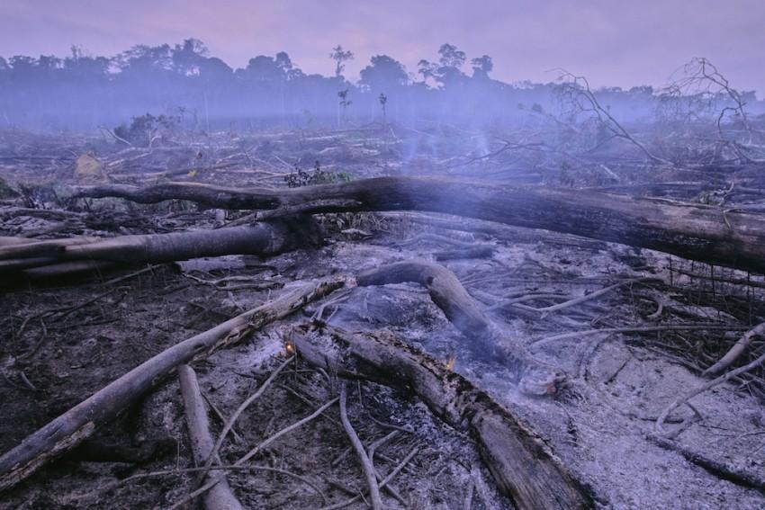Selva deforestada para la agricultura, cerca de Manaus, Brasil