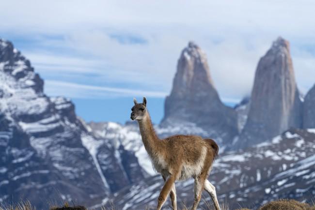 Parque Nacional Torres del Paine. Foto: Tompkins Conservation
