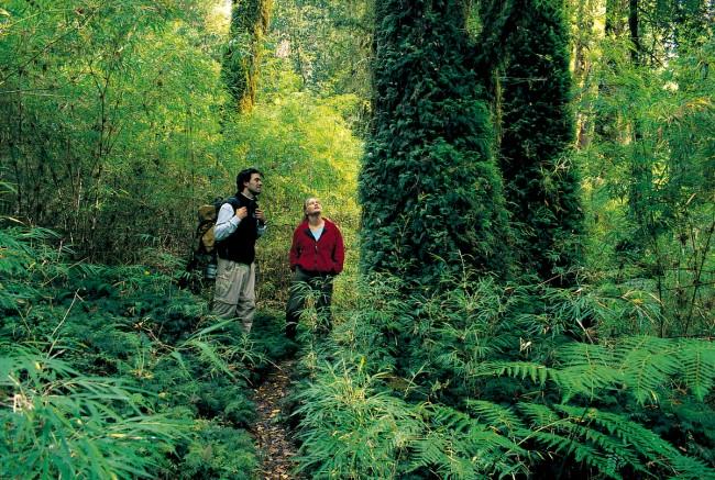 Parque Nacional Alerce Andino. Foto: Tompkins Conservation