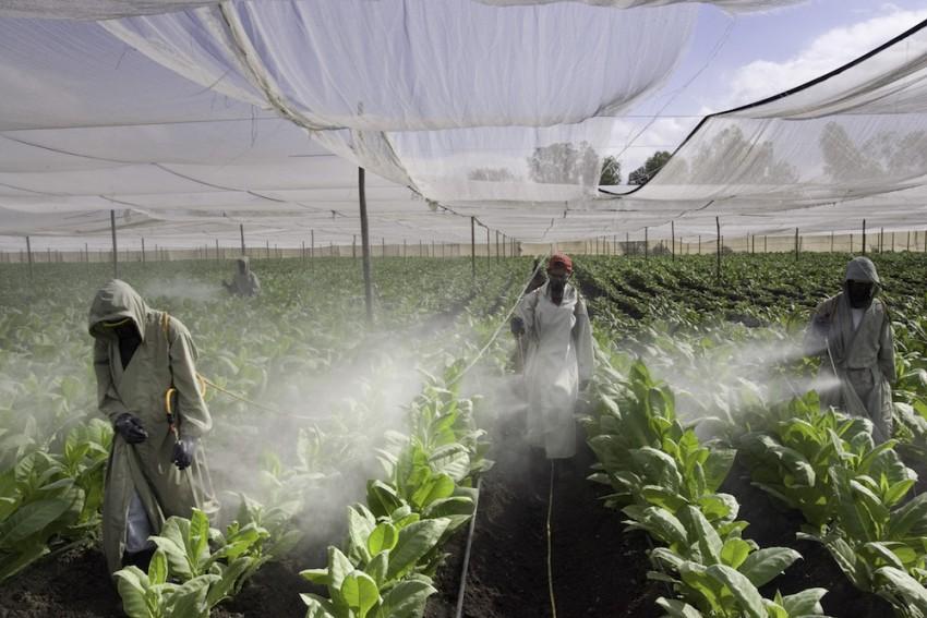 Pulverizadores de pesticidas, granjas de tabaco, Nicaragua