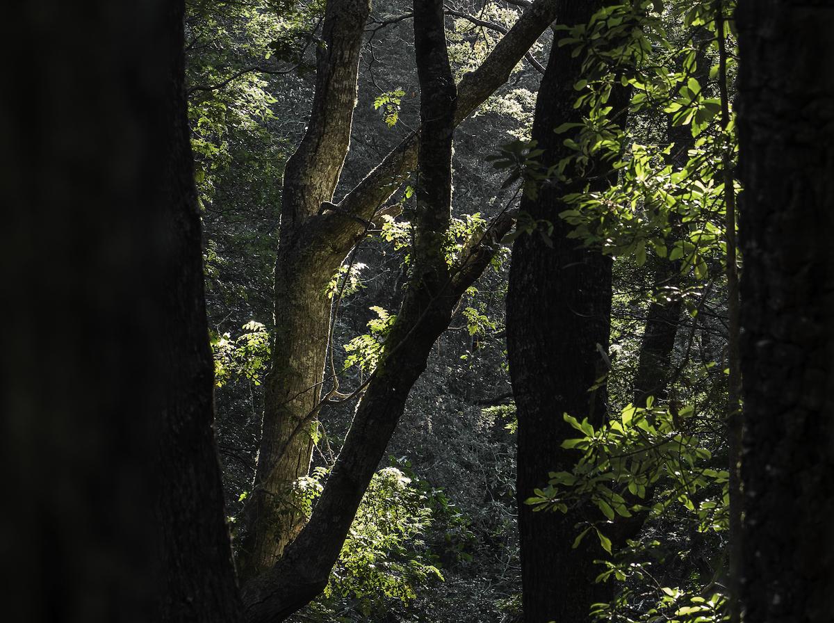 La última luz en el bosque.